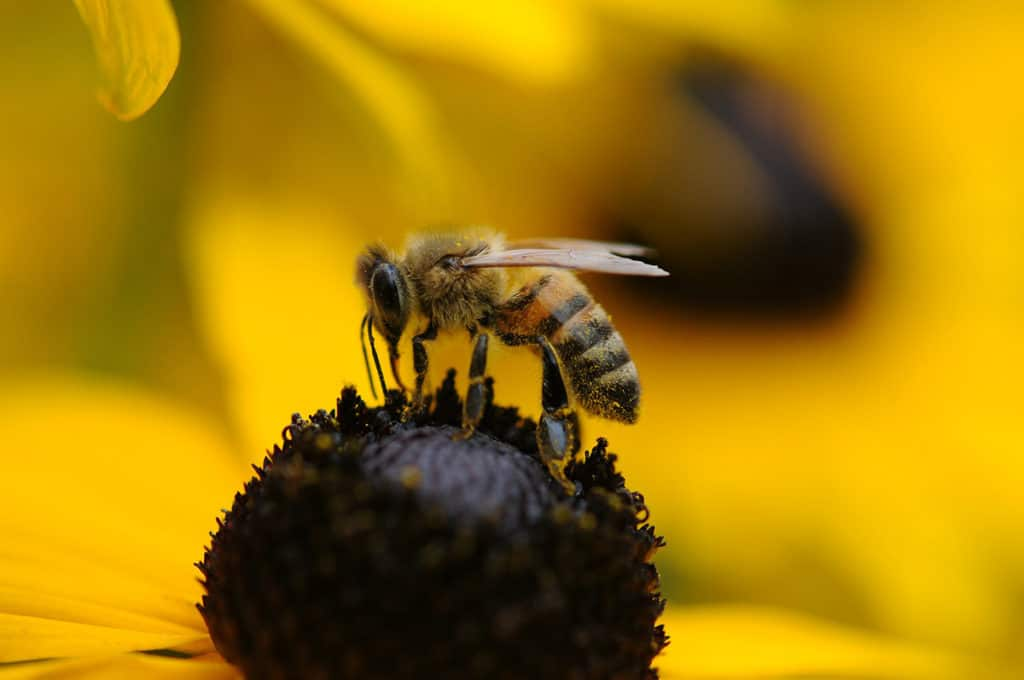 importance of bees pollination