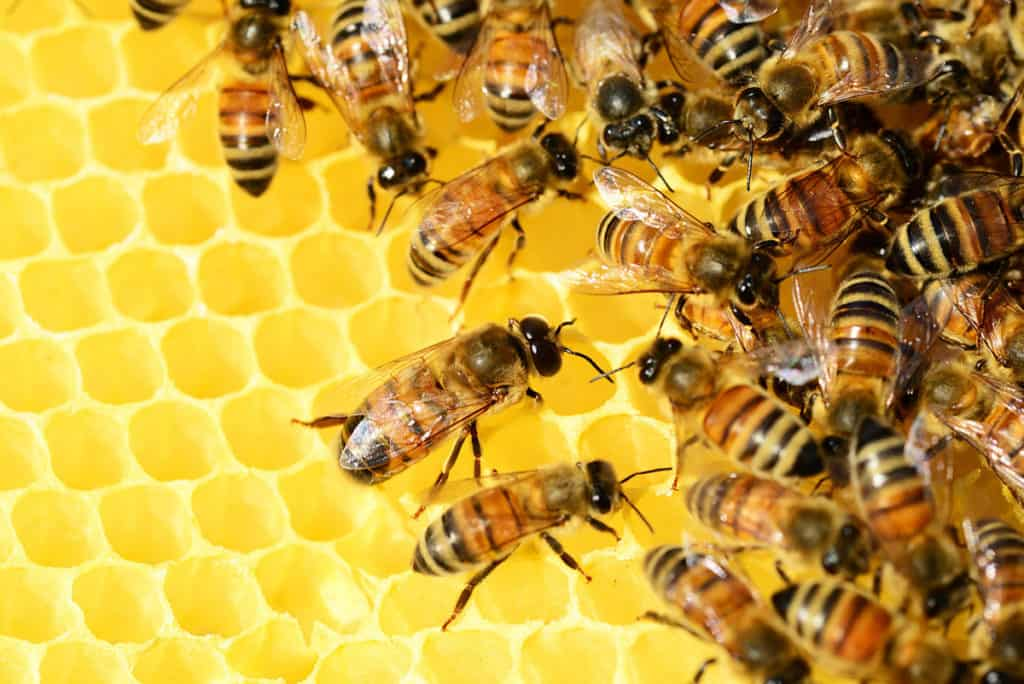 the importance of bees hive